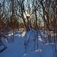 Зимний восход :: Вера Андреева