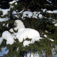белый пудель отдыхает... :: Галина Филоросс