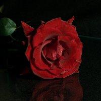 Алая роза - ... :: Сергей Борденов