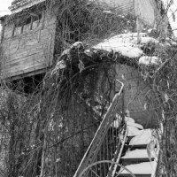 Заброшенный флюгер :: Андрей Лобанов