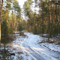 Лесная зимняя дорога :: Леонид Корейба