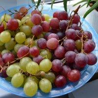 Дары виноградной лозы... :: Виктор Бусель