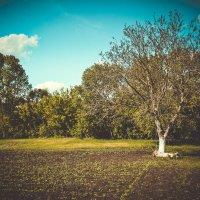 любимый огород :: Наталия Квас