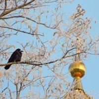 мудрый птиц :: ольга хадыкина