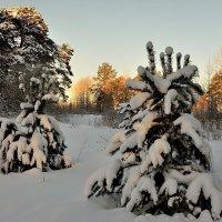 Зимнее утро :: Валентин Котляров