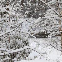 В снегах :: Михаил Лобов (drakonmick)