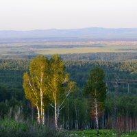Сибирский лес :: Натали