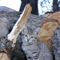 Сижу, дрова охраняю :: Николай Воробьёв