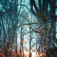 рассвет :: Солнечная Лисичка =Дашка Скугарева