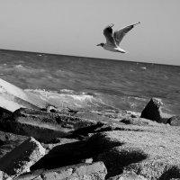 чайка :: Tanya Borokhta