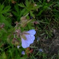 Роса на цветочке :: Mary Коллар