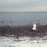 Чайки и снеговик :: Людмила