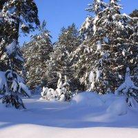 зимой в лесу :: Наталья