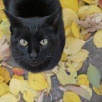 Данко и осень. :: Таня Чеботарева