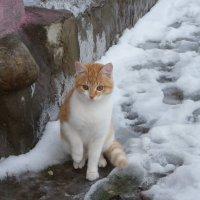 Рыжик на прогулке. :: Святец Вячеслав
