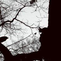 Лесной набросок :: Полина Ваневская