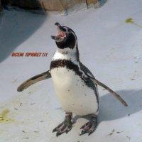Пингвин Филька. :: Чария Зоя
