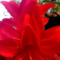 Первая стрелка отцветая стоит в полной красе :: Galina194701