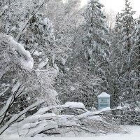 Зима в Марийской тайге :: Иля Григорьева