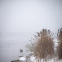 Туманный день :: Астарта Драгнил