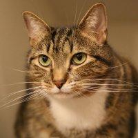 Наш котяра - красавец :: Яков Геллер