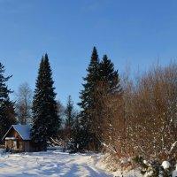Избушка в лесу :: Вера Андреева