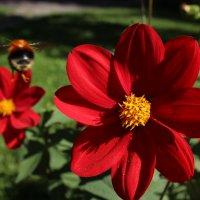 От цветка к цветку :: Александр Велигура