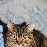 Моя кошка) :: Машуня Орлова