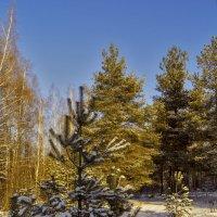 Зимний день :: Андрей Дворников