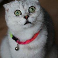 Взгляд прямо в душу:D :: Полина Алатырева