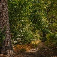 В парке Монрепо :: Надежда Лаптева