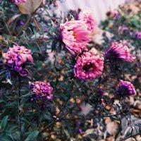 Цветы в ноябре. :: Таня Чеботарева