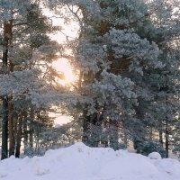 Розовость зимнего утра :: Павлова Татьяна Павлова