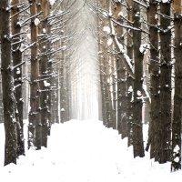 Странный лес :: Елена Баландина