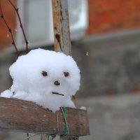 Снежок :: Юрий Гайворонский