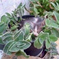лучшие места - котятам :: Алексей Меринов