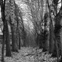 Тихая  старая аллея.... :: Валерия  Полещикова
