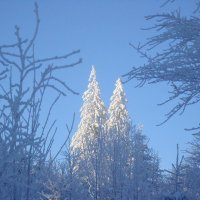 Во владеньях инея и снега расцвели хрустальные сады :: Olga