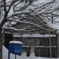 Ветвистое дерево :: Наталья Ремизова