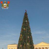 Смоленск. Новогодняя ёлка (2013 год) :: Алексей Шаповалов Стерх