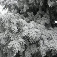 вся с зимнем серебре :: Igor Osh