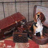 Картина, коробка, картонка и маленькая собачонка! :: Тата Казакова