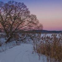 Вечернее чудо-дерево. :: Виктор Евстратов