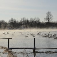 Лебединое озеро :: Андрей Гл.