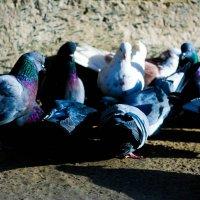 голубята :: Tanya Borokhta
