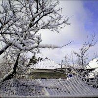 Снежный денек :: Татьяна Пальчикова