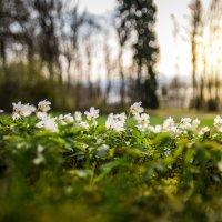 Весна :: Евгений Дударев