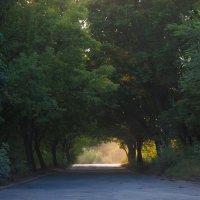Зелёная арка :: Светлана Росинская