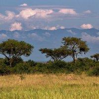 Уганда - жемчужина Африки :: Евгений Печенин