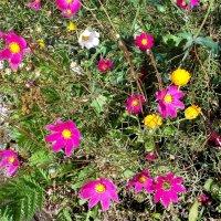 Сентябрь.... :: Фотогруппа Весна.
